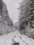Giorno di inverno nella foresta immagini stock