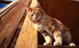 Giorno di inverno rosso del gattino Immagini Stock