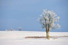 Giorno di inverno soleggiato in Lituania Fotografia Stock