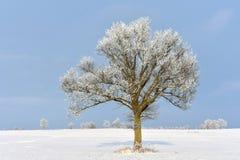 Giorno di inverno soleggiato in Lituania Fotografia Stock Libera da Diritti