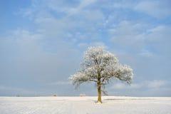 Giorno di inverno soleggiato in Lituania Immagini Stock