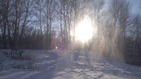 Giorno di inverno soleggiato nella foresta stock footage