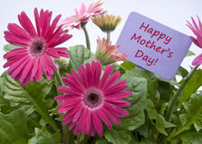 Giorno di madri felice con i fiori Immagini Stock Libere da Diritti