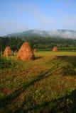 Giorno di mattina sul lato del paese Fotografia Stock