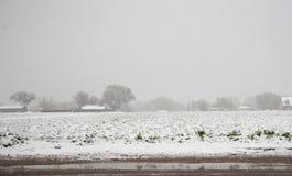 Giorno di molla di Snowy Fotografie Stock Libere da Diritti