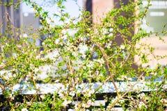 Giorno di molla soleggiato sull'alta linea di New York Immagini Stock