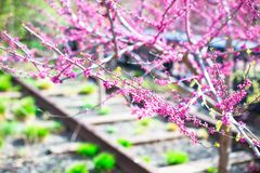 Giorno di molla soleggiato sull'alta linea di New York Fotografie Stock Libere da Diritti