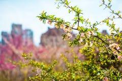 Giorno di molla soleggiato sull'alta linea di New York Immagini Stock Libere da Diritti