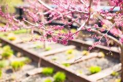 Giorno di molla soleggiato sull'alta linea di New York Immagine Stock Libera da Diritti