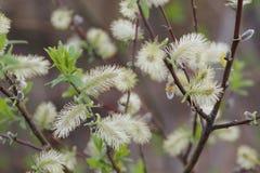 Giorno di primavera nella foresta Fotografia Stock