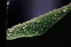 Giorno di Rainning Fotografie Stock