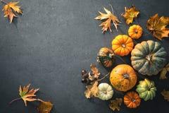 Giorno di ringraziamento o fondo autunnale stagionale con le zucche a fotografia stock libera da diritti