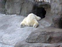 Giorno di riposo dell'orso Immagini Stock