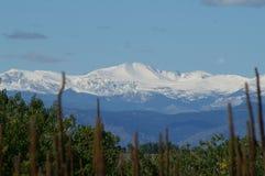 Giorno di Snowy nelle Montagne Rocciose Immagini Stock
