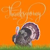 Giorno felice di ringraziamento con la Turchia Fotografie Stock