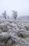 Giorno freddo fotografie stock