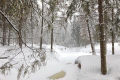 Giorno freddo nella foresta nevosa di inverno Immagini Stock Libere da Diritti
