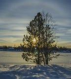 Giorno freddo in una riva del fiume congelata con i sunflares attraverso l'albero immagine stock libera da diritti