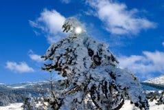 Giorno gelido del sole fotografia stock