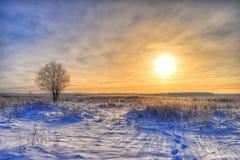 Giorno gelido soleggiato di inverno solo dell'albero Fotografia Stock Libera da Diritti