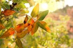 Giorno luminoso di autunno fotografie stock libere da diritti