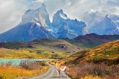 Giorno maestoso nella Patagonia Immagine Stock