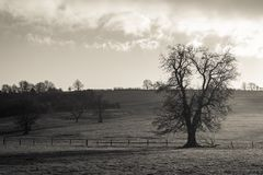 Giorno nebbioso fotografia stock