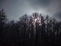 Giorno nebbioso di inverno in foresta fotografia stock libera da diritti