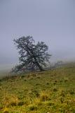 Giorno nebbioso nelle montagne di Altai, la Russia Fotografia Stock Libera da Diritti