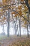 Giorno nebbioso in una foresta Fotografia Stock