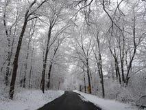 Giorno nevoso della strada posteriore Immagine Stock Libera da Diritti