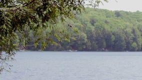 Giorno nordico del paesaggio del lago video d archivio
