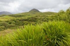 Giorno nuvoloso in parco nazionale Immagini Stock