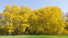 Giorno piacevole di autunno fotografie stock