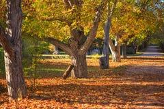 Giorno pieno di sole di autunno Immagine Stock