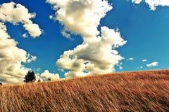 Giorno pieno di sole di estate fotografie stock
