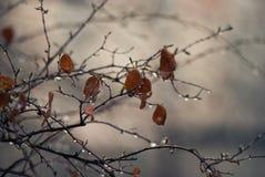 Giorno piovoso della sorgente Fotografie Stock