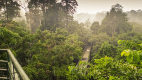 Giorno piovoso in foresta pluviale, wiew dalla torre della passeggiata del baldacchino in Sepilok, Borneo Fotografia Stock
