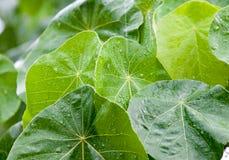 Giorno piovoso nel tropico Immagine Stock