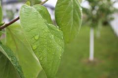 Giorno piovoso in Romania, il mio viaggio Immagine Stock Libera da Diritti