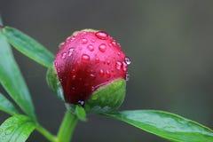 Giorno piovoso sul giardino fotografia stock