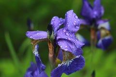 Giorno piovoso sul giardino immagine stock