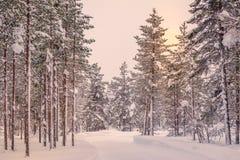 Giorno polare nella foresta di Snowy immagini stock