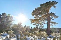 Giorno soleggiato Fotografia Stock