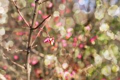 Giorno soleggiato autunnale Fotografie Stock