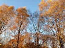 Giorno soleggiato in autunno immagine stock