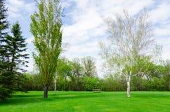 Giorno soleggiato bello in parco a tempo di molla Immagine Stock Libera da Diritti