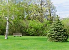 Giorno soleggiato bello in parco a tempo di molla Fotografie Stock
