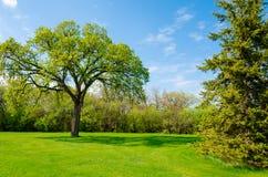 Giorno soleggiato bello in parco a tempo di molla Immagine Stock