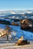 Giorno soleggiato congelato di un inverno, sulle colline selvagge della Transilvania Immagine Stock Libera da Diritti